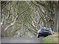 D0333 : Dark Hedge Bregagh Road nr Stranocum by Ian Paterson