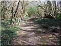SN1135 : Path near Brynberian by ceridwen