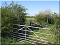 SJ4455 : Field Gate, Hedges and Sheep from Highfield Lane by John S Turner