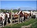 SJ4355 : Stile and Cows near Highfield Farm by John S Turner