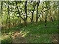 SE3111 : Windhill Wood Footpath by John Fielding
