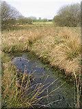NX7078 : Knowetop Lochs Wildlife Reserve by Walter Baxter