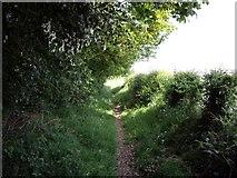 SJ6950 : Footpath into Wybunbury by Ian Bottomley