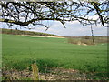 TR0149 : View east from Challock Manor/Church Cottages by David Elvin