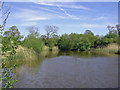 SJ5072 : Fishing pool near Manley Old Hall by Mike Harris