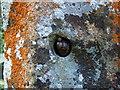 SM9628 : Snails little and large by ceridwen