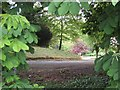 J5052 : A glimpse into the grounds of Ballytrim House by Oliver Dixon