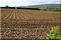SX3774 : Neat Rows by Tony Atkin