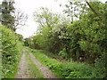SP8026 : Bridleway with hedges by David Hawgood