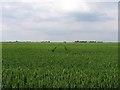 TL3386 : Fenland field by Andrew Tatlow