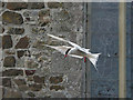 NU2135 : Arctic Tern by St Cuthbert's Chapel by Dave Dunford