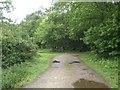 TG3113 : Track dog legging into Fir Brake by Nigel Jones