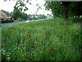SK5244 : Wildflower bank, Nottingham Road by Lynne Kirton