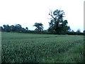 TL2869 : Field alongside New Road by Andrew Tatlow