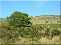 W0576 : Grazing Land by Mary and Angus Hogg
