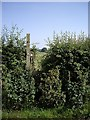 SJ6649 : Overgrown Stile by Ian Bottomley