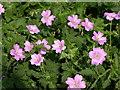 SD7915 : Flowers beside footpath by liz dawson
