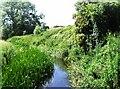 TL9327 : River Colne between Fordstreet - West Bergholt by David Kemp