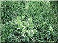 SM7829 : Mixed crop by ceridwen