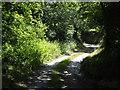 SX1663 : Cornish lane by Jonathan Billinger