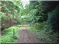 SO5009 : Footpath junction on forest road in Graig Wood by Roy Parkhouse