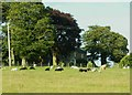 NY4663 : Sheep and cattle at Hall Flatt by Rose and Trev Clough