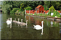 SJ9003 : Swans on Staffs & Worcs Canal by Stephen McKay