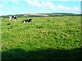 SX0475 : Trevisquite manor farmland by William Bartlett