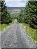 NX5489 : Forest track near Darnaw, Forrest Estate. by Bob Peace