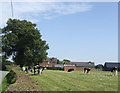 SJ7961 : Dairy cattle at Yew Tree House Farm by Jonathan Billinger