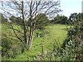 SJ7861 : Stream on the hillside by Jonathan Billinger