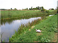 TL3291 : Duck and drain, old course of the River Nene by Rodney Burton