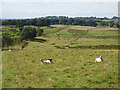 NY6065 : Hadrian's Wall National Trail, near Birdoswald by Oliver Dixon