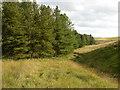 SD7320 : Broadhead Forest by liz dawson