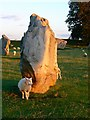 SU1069 : Sheep, shadows and standing stones, Avebury Circle, Wiltshire by Brian Robert Marshall