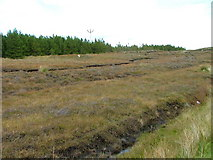 NB2113 : Moorland by Aline Community Woodland by Dave Fergusson