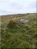 SH8342 : Rough moorland near Craignant by Eirian Evans