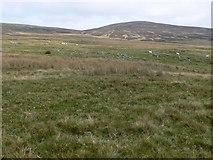 SH8543 : Moorland plateau by Eirian Evans
