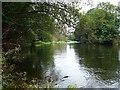 SO1393 : River Severn near Freestone lock by Penny Mayes
