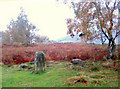 SK2476 : The main stone in Froggatt Stone Circle by Roger Temple
