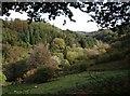 SX3077 : Inny valley at Trefrize Mill by Derek Harper