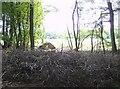 SU6983 : Edge of Bear Wood by Graham Horn