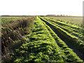 TL2285 : Drove through Woodwalton Fen, Cambs by Rodney Burton