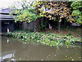 SJ8746 : What knot to do with Japanese Knotweed, Stoke-on-Trent by Roger  Kidd