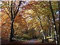 SU9585 : Autumn in Burnham Beeches by Mark Percy