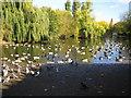 TQ4484 : Barking Park: The Lake by Nigel Cox