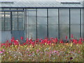 TF4125 : Red, Yellow, Pink and Greenhouse by Ian Paterson