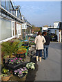 Dist:0.1km<br/>A well-stocked garden centre on Beech Hill Road. More details on its website: http://www.swanlandnurseries.co.uk