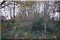 SX5656 : Holland Plantation by Nigel Mole
