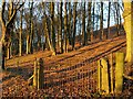 SK2084 : Woodland Sunset at Mooredge by John Fielding